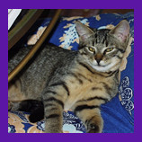 Meadow Park, California, Dubya the cat who was enjoying his secret den.jpg