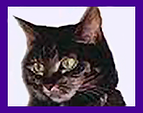 Learn how a pet psychic can help you learn what your animals friends in spirit are thinking. Pet Psychic, pet medium, pet channeling