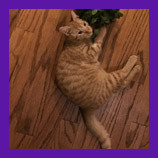 Germantown, Tennessee missing cat is found with help of pet psychic.  Review and testimonial from an