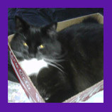 Huntington, West Virginia missing cat found with help of animal communicator. Missing cat's owne