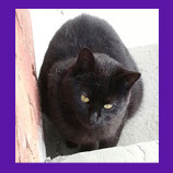 Yorktown Heights, New York missing semi-feral cat is coaxed home by animal communicator.