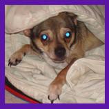 Las Vegas, Nevada missing dog found with help of animal communicator.