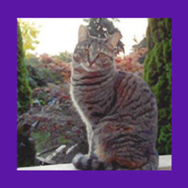 Bellingham Washington cat found with the help of a Pet Psychic.