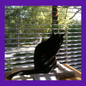 When one animal communicator helps another find a lost pet. Lost senior aged cat with health issues is  found with help of pet psychic.