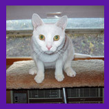 Virginville, Pennsylvania missing cat found with help of animal communicator.