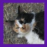 Ashland, Oregon lost cat recovered with help of animal communicator.