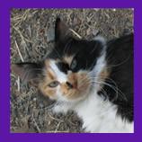 Ashland, Oregon missing cat found with help of animal communicator