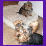 Las Vegas, Nevada lost dogs found with the help of animal communicator. Skeptical owners are pleasan
