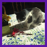 Polson, Montana lost cat found with help of Animal Communicator.