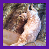 La Mesa, California missing scared cat coaxed out of hiding with help of pet psychic. Pet psychic he