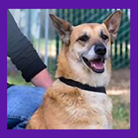 Foster Dog Found in Beaverton Oregon.jpg