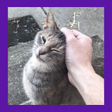 Cincinatti, Ohio lost feral cat found with the help of animal communicator.
