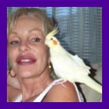 Tampa Florida bird coaxed home.jpg