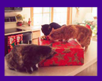 how to coax a scared cat to come out of hiding, fear based behavior cats, how to find missing cats, lost cats