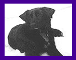 Pet Psychic helps dog overcome fear based behavior, anxiety, fear of strangers