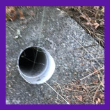 Shoreline, Washington trapped cat in hole is rescued with help of pet psychic.