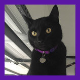 Perry Hall, Maryland missing cat found with help of pet psychic.