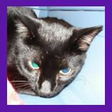 Camoflage Kitty Returns McPhearson.jpg