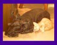 Missing dog, Texas, Found, Pet Psychic, Animal Communicator, Locate Lost Pet