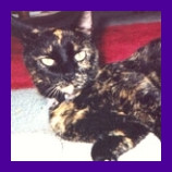 Callie the cat is recovered after hiding under neighbors porch.jpg