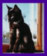 Fear based cat behavior, missing cat found, Oregon, pet psychic, lost cat