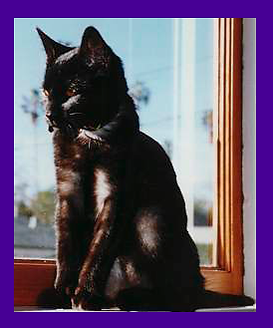 Fear based cat behavior, missing cat found, Oregon, pet psychic, lost cat