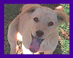 Stolen dog, recovery, pet tracking, Pet Psychic, Mississippi, animal communication, tv news story