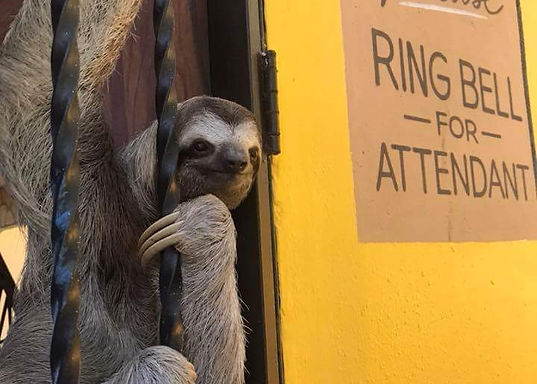 sloth at the door
