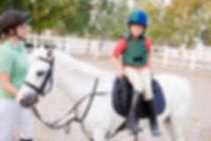 Horse fences SE QLD