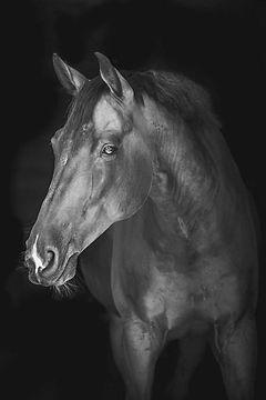 cheval_edited.jpg