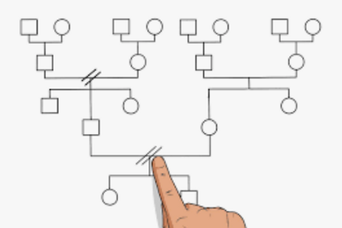 Integrating the Sexual Genogram into your Work