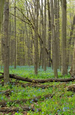 Primavera Foresta