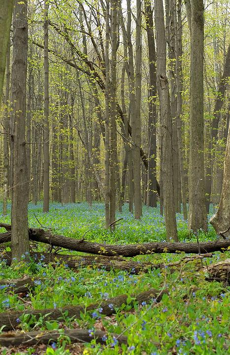 Frühlings-Wald