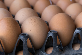 œufs frais