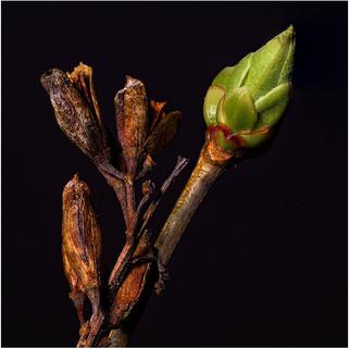 Lilac (I think)