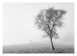 TREE IN MIST DURING LOCKDOWN
