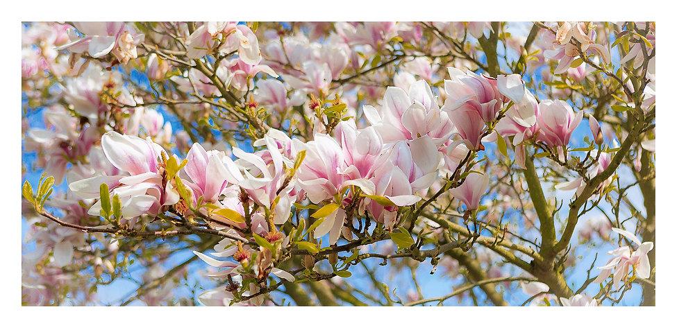 21The Magnolia at No.14 3000.jpg