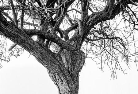 COLD TREE 2