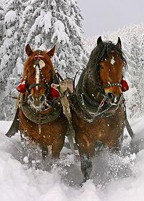 Pferdeschlitten Ramsau am Dachstein