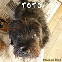 Toto-AC-PelicanPete.jpg