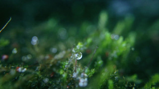 Music for Meditation - Enchanted Forest Theme 2020