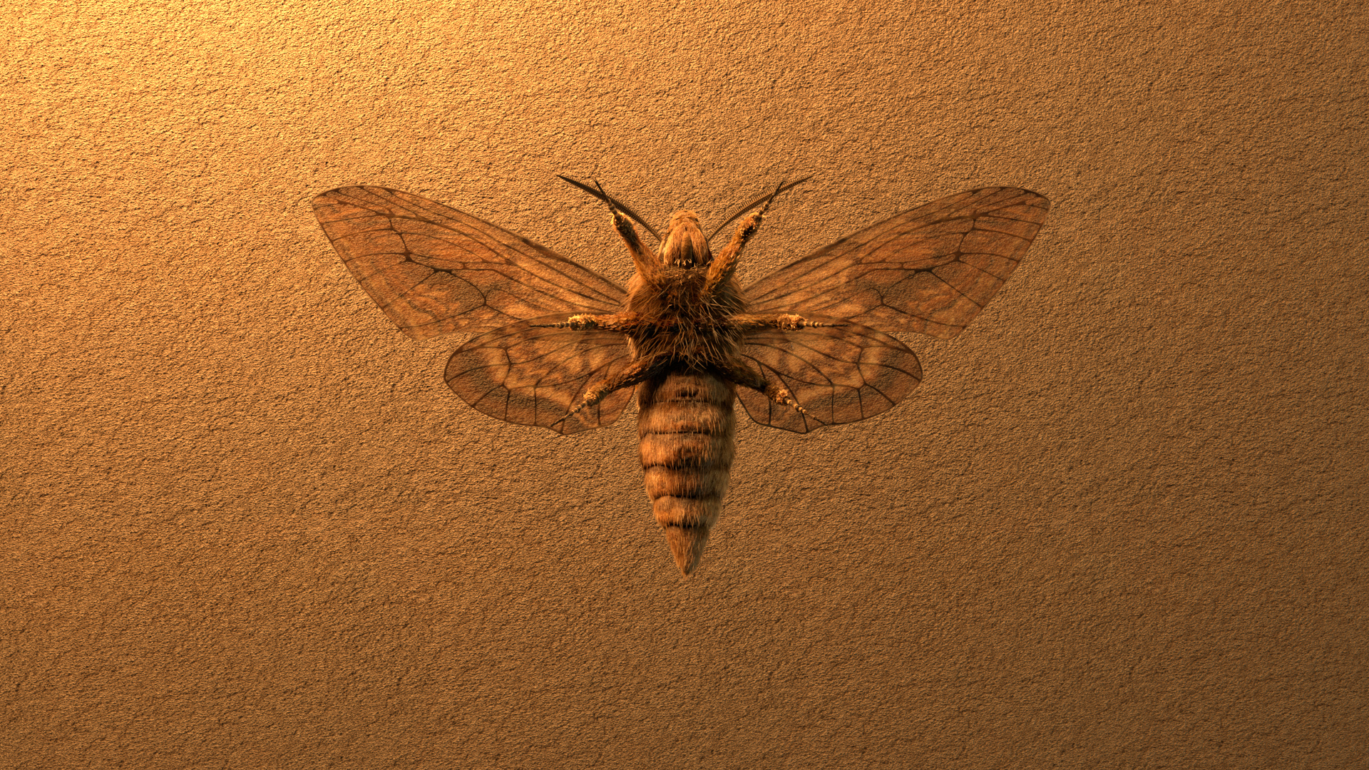moth03