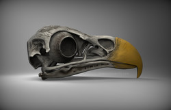 birdSkull_rightSide_v01_branded