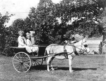 Kids in donkey cart