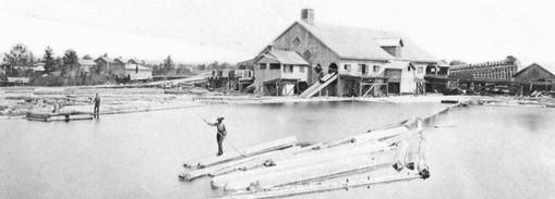 Log Sorting at the Mill