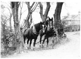 Boyd draft horses NAC