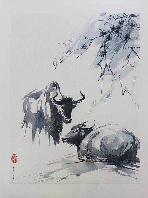 Xingping, China (Twee stieren)