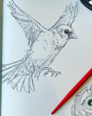Supply List For Drawing Small Creatures In Pen & Ink