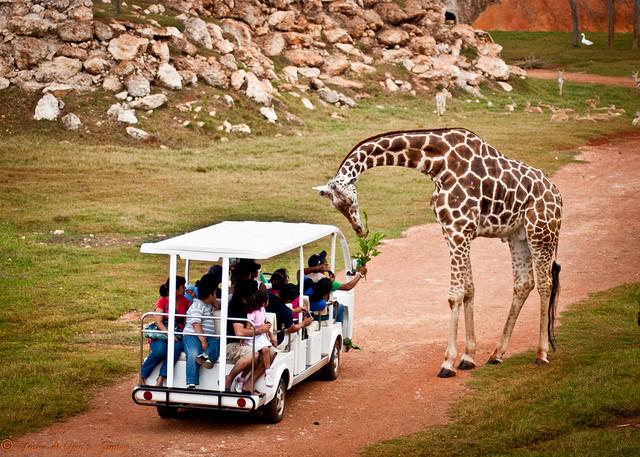 Zoo North Merida