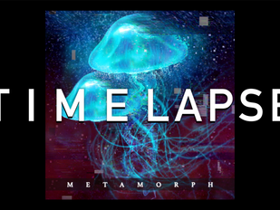"Timelapse for "" Metamorph """